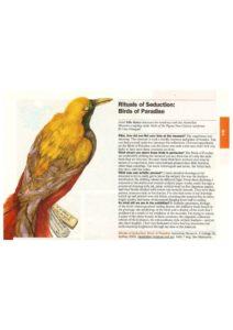 thumbnail of Lisa Omagari 'Rituals of Seduction' Time Out, May 2011 p 41